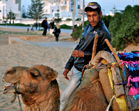 The Camel Guide