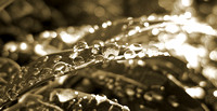 Raindrops in Sepia